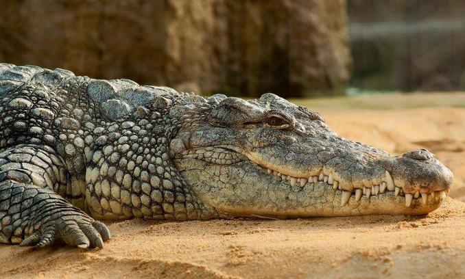 Nature of Quintana Roo