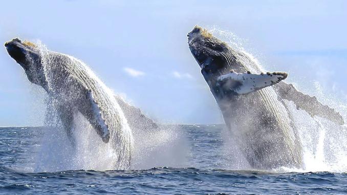 Espectacular avistamiento de ballenas en Los Cabos.