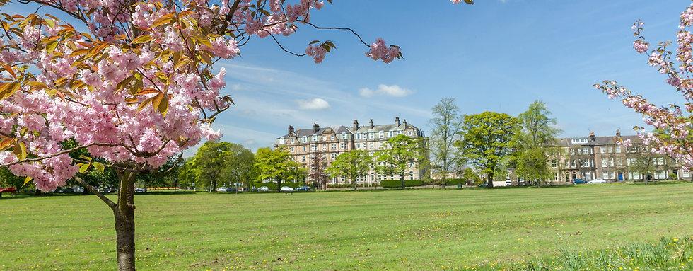 Cherry blossom in Harrogate