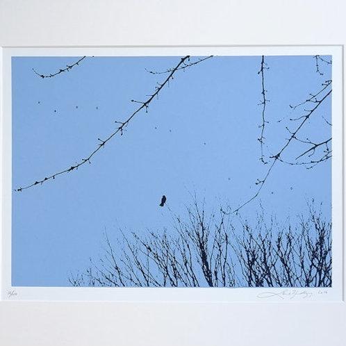FREE AS A BIRD (BLUE)