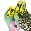 Budgie with Party Ring