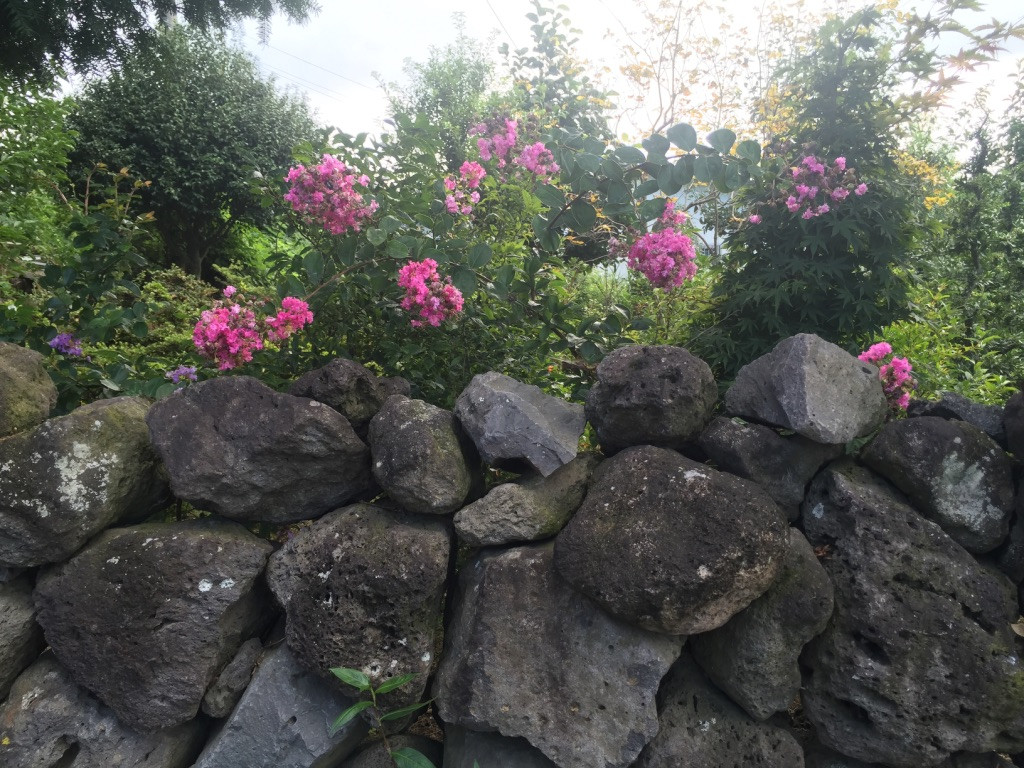 Jeju_Flowers along the stone wall