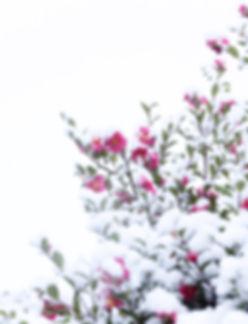 shutterstock_227064223_edited.jpg