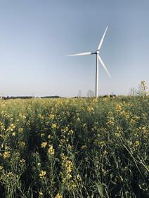 Jeju_Wind mill