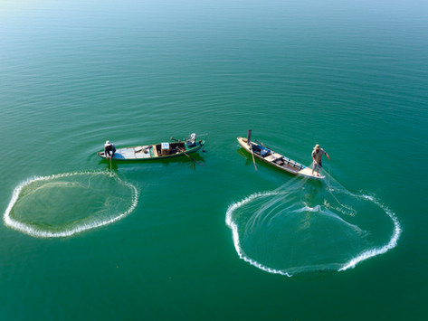 The Environmental Impact of the Fishing Industry