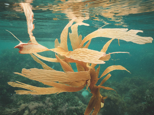 The Need for Seaweed