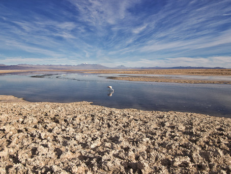 The Lithium Triangle: How Electric Vehicles Are Putting Indigenous Communities at Risk