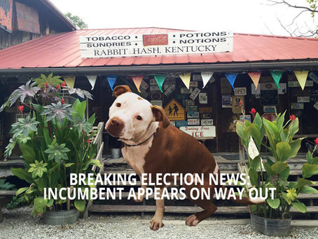The 2020 election you can't miss: town voting to elect dog as new mayor