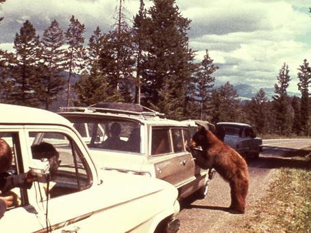 Retro Roadtrip: Yellowstone through the years