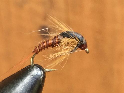 Humped Mayfly