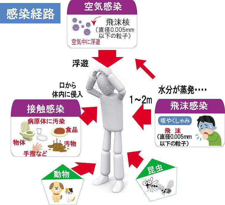 感染経路図b.jpg