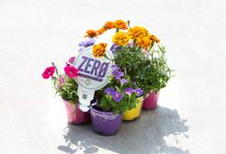 misto fiori con fascia_edited
