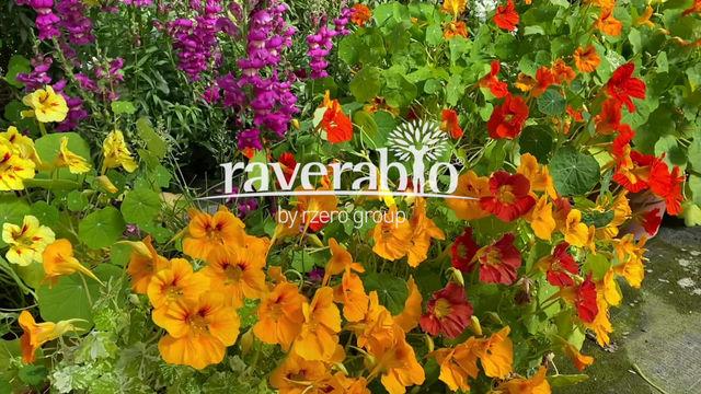 Le nostre coltivazioni di fiori Eduli Bio. Il fiore è un ingrediente.