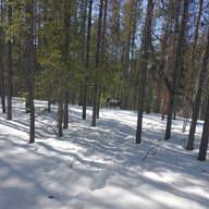 Moose along the Magic Line trail on the Cardiac Arrest hill by Barbara Bilinski