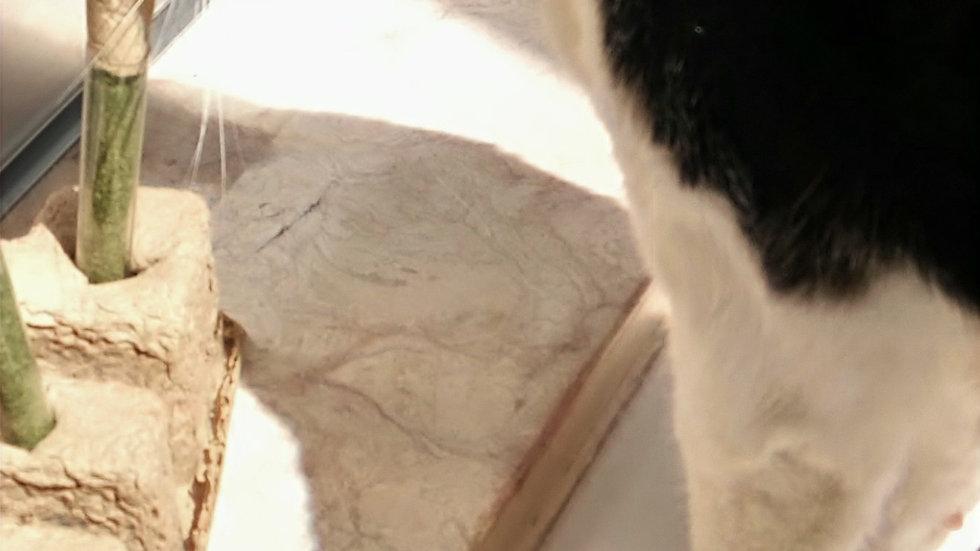 Tubos de ensaio catnip orgânico para gatos iniciantes
