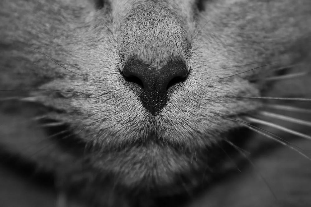 Comprei catnip ou erva dos gatos e o meu gato não gostou?