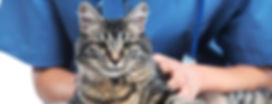 CATNIP_CATUP_capa_gato_e_veterinário_red