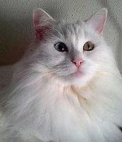 Emy rcomenda catnip catnup