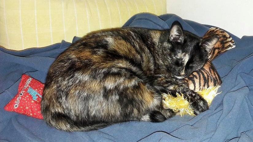 Brinquedo para gato com catnip orgânico cathug