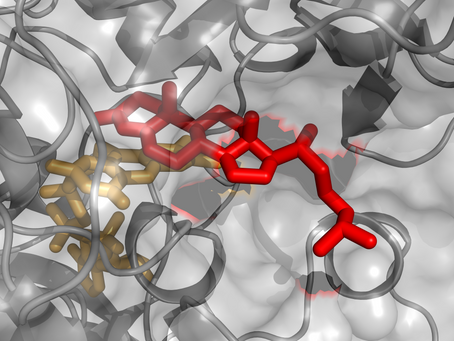 Modeling predicts the unknown activity of 3-ketosteroid Δ1-dehydrogenase from R. erythropolis