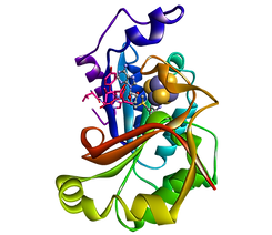 structure of activating enzyme