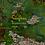 Thumbnail: Small Map