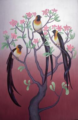 PARADISE WHYDAHS in DESERT ROSE TREE