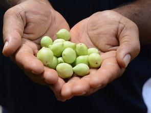 Have You Tried Kakadu Plum Before? Hear The Benefits of Embracing Australian Bush Superfoods
