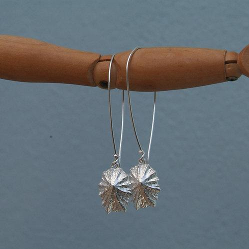 Silver Limpet Shell Earrings