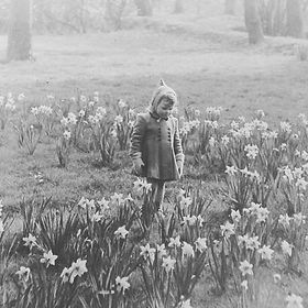 Girl among Daffodils 1950's