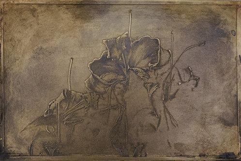היביסקוס בקמילה - Bronze etching 10/15 cm