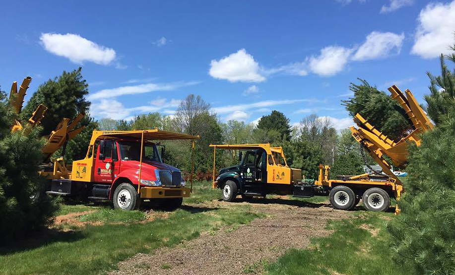 Tree spade trucks removing trees from a nursery.