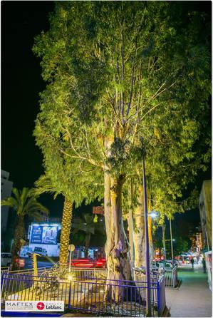 תאורה לעצים בעיר