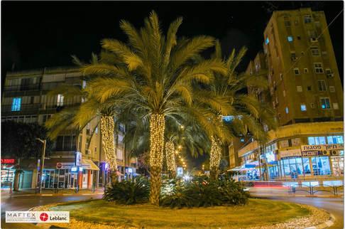 תאורת עצי דקל - קריסמס
