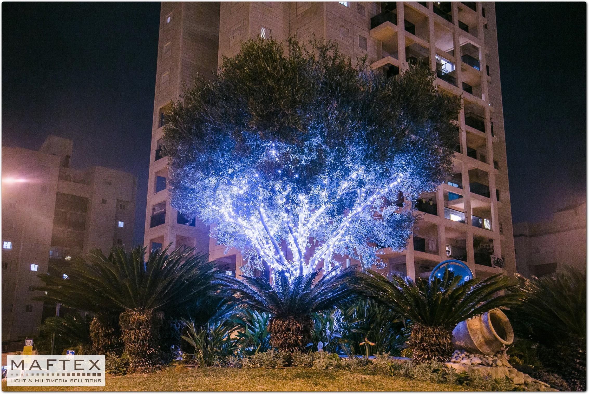 תאורה יפה לעץ