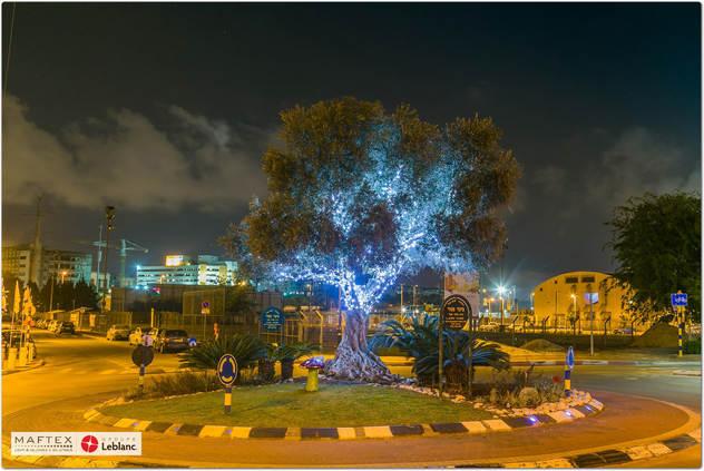 תאורה לעץ זית