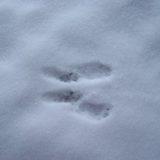 6 Tracce scoiattolo.JPG