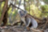 animal-cute-fur-105823.jpg