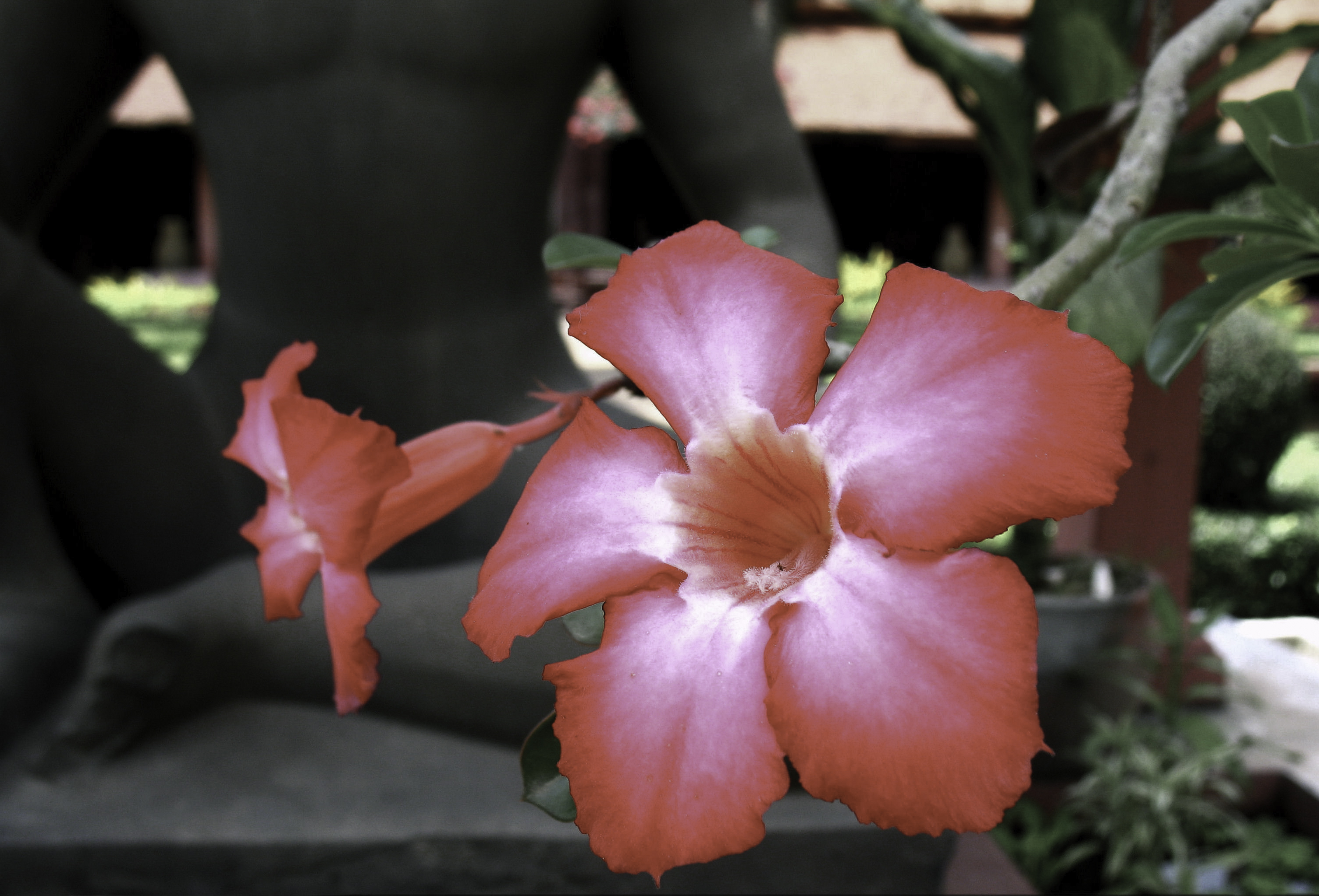 Naughty Flowers