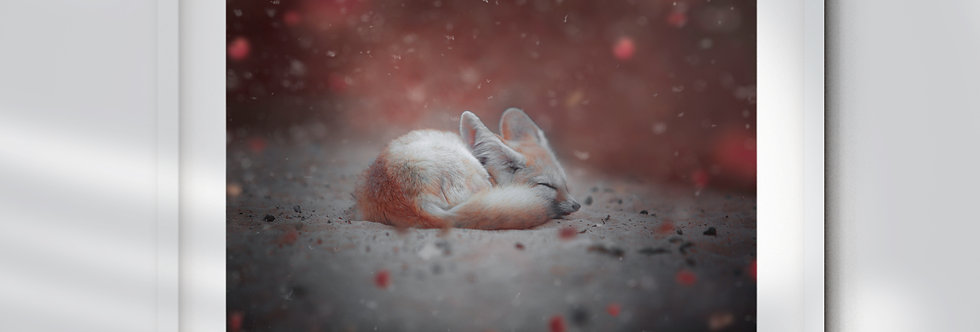 Little Red Fennec