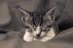 The Meditating Kitten