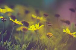 Light A Flower