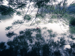 Misty Dreamwalk