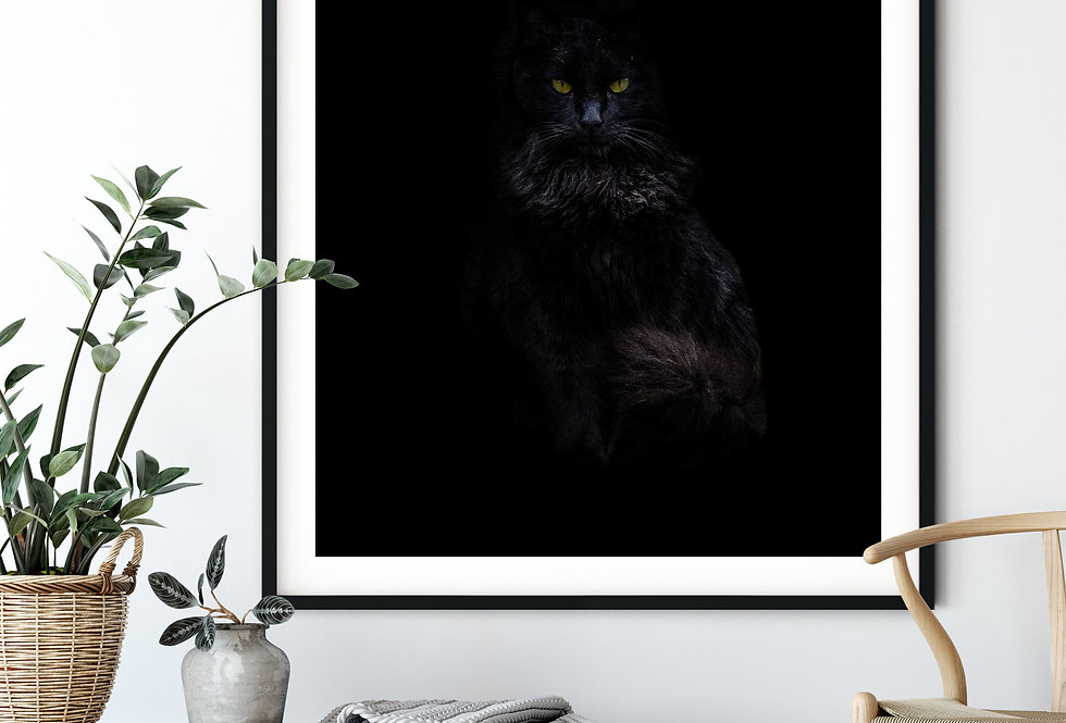 Less Is More - The Catfather