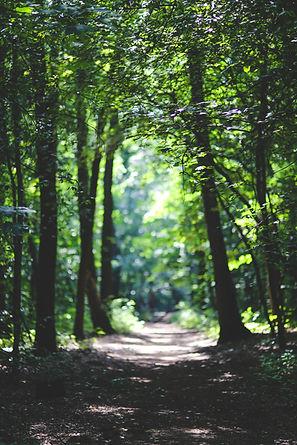 forest-path-trees-6037.jpg