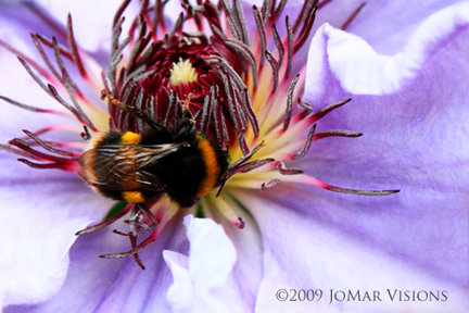 """Nectar"""
