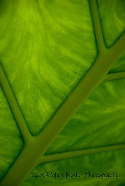 Broadleaf Patterns #2, Eden Project.jpg
