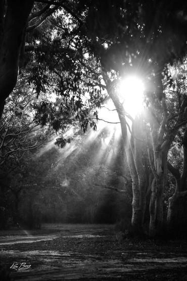 """""""Heavenly Light"""""""