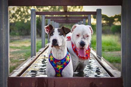 Daisy & Diesel