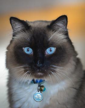 Bella Blue Eyes